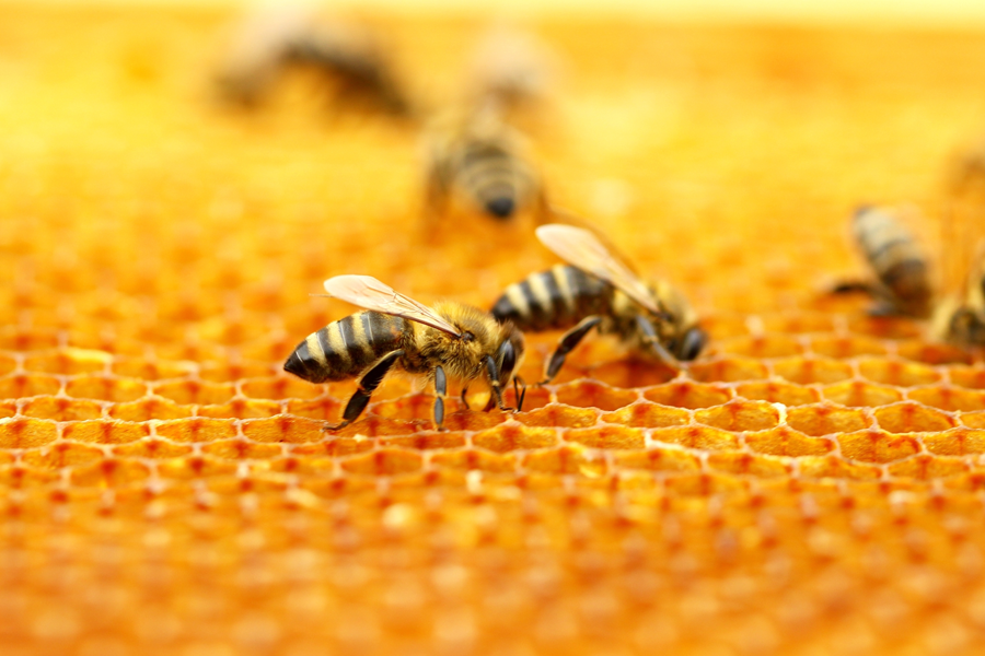 Cera de abeja SANNICOLÀS